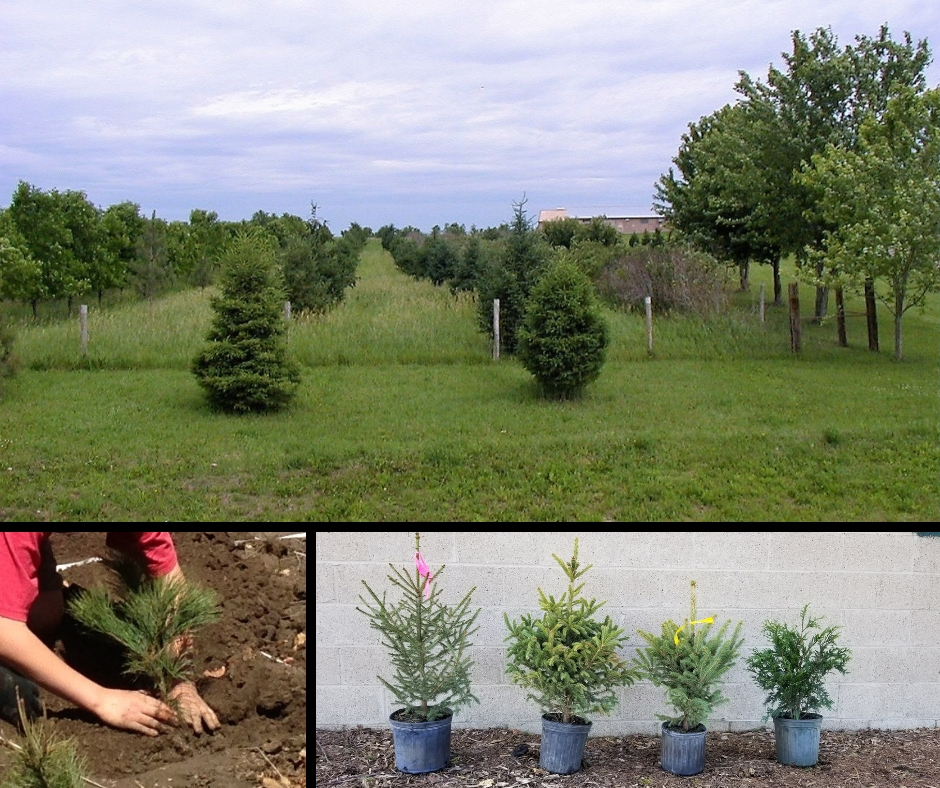 Trees For Conservation Rice Soil And Water Conservation District